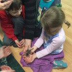 eco-animales-spider-stroud