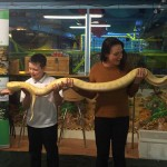 snake-encounter-stroud