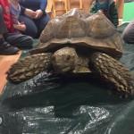 tortoise-stroud